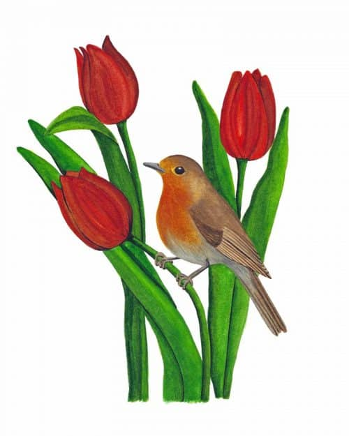 Robin Among the Tulips