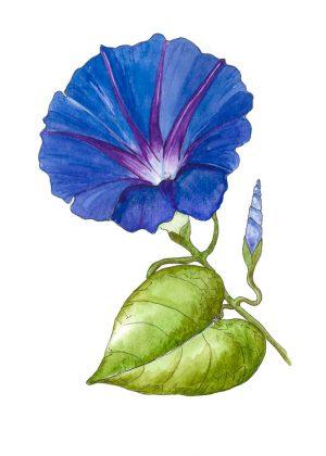 Flowers & Plants Art Prints
