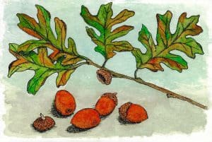 Autumn Acorns and Leaves Card