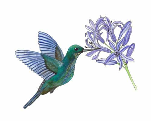 Hummingbird Floral Art Print