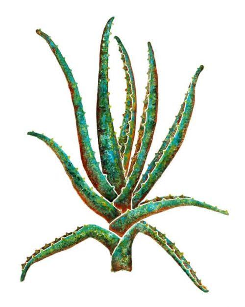 Succulent House Plant Collection